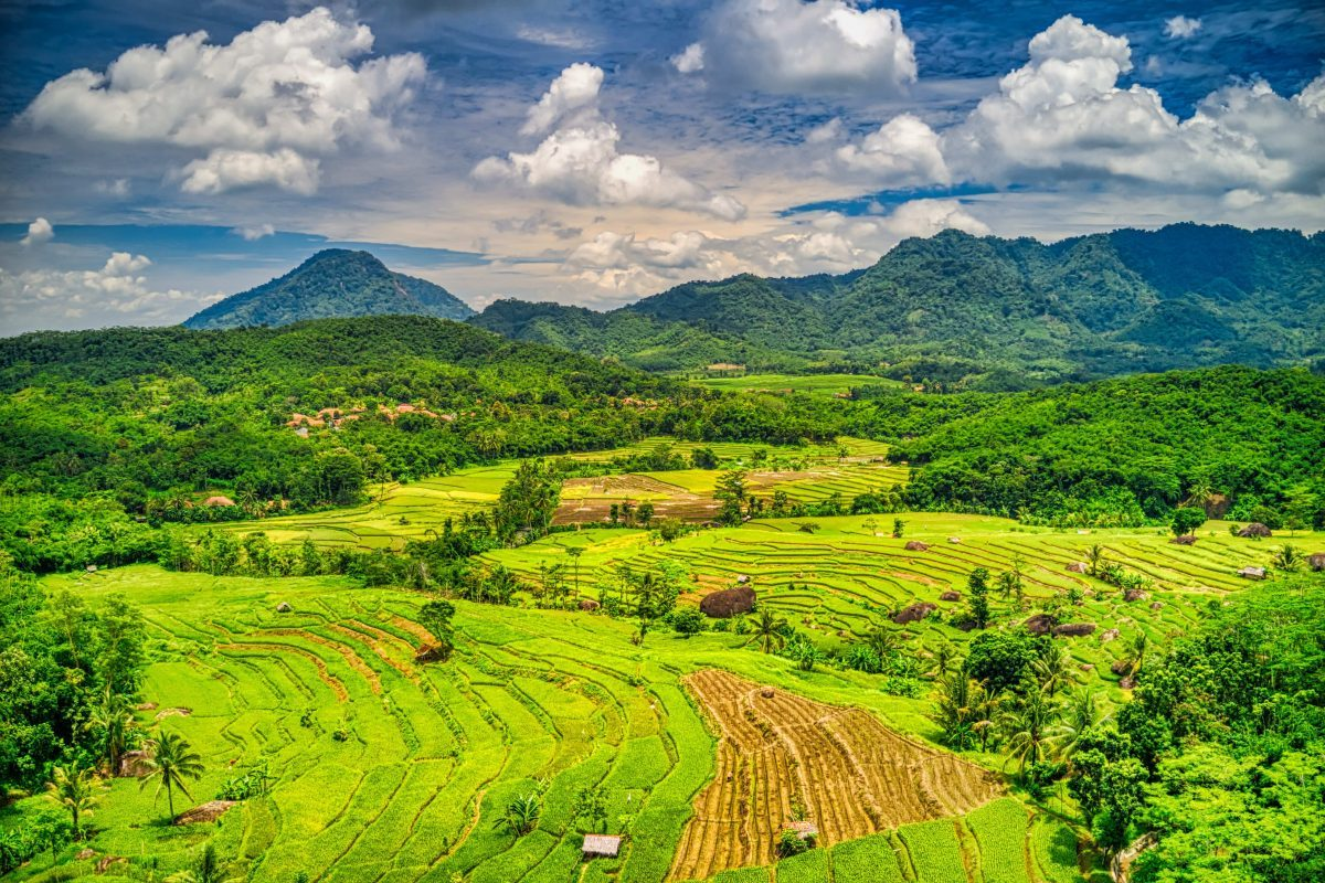 Blockchain Technology and the Agricultural Industry in Indonesia